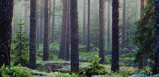 Vacker, klimatsmart – och överraskande billig: En skog att älska ...
